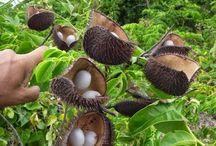 frutti-bahamas