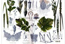 phytopathology