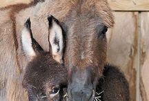 Donkey tonkey
