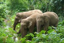Elephants / Elephants from all over the world