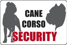 Cane Corso signs / Just some stuff and pics about the Canecorso breed