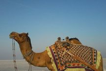 Kutch, Gujarat / One of the best travel destinations within India