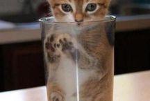Милотаа, kitten, котята, кошки