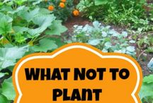 What veggies you don't plant together