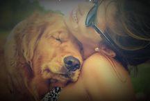 Meu Cão, meu Amigo!