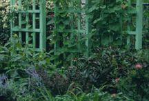 Gardening / Growing good stuff