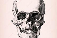 Vintage Drawing Human Anatomy