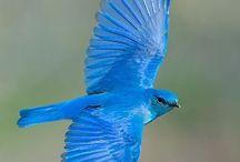 Özgürr kuşlarrrr