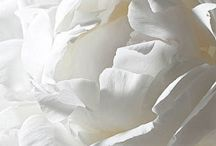 color | white / All gorgeous white things. Photography, art, style, home.