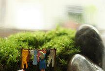 """Twig Terrarium"" / by Erica LaMothe"