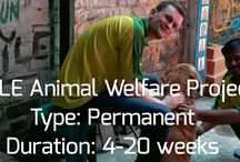 Animal welfare project