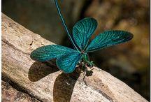 Butterfly tTurquesa