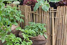 Garden maniac / All things in a utopian garden