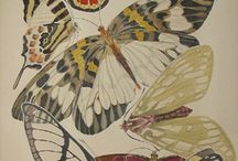 Papillon vole .... Butterfly