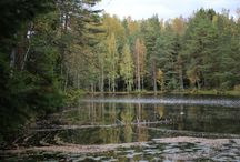 Ruska in Finland / Autumn colors are coming. Who needs summer anyways?
