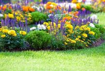 Wake Up Your Yard / Spring has officially sprung! After a long winter's nap, now is the time to wake up your yard and get your landscaping started on the right foot.  / by Swingle