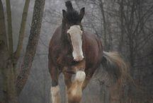 Hevoisia / Kavioeläimet on uljaita olentoja ja jokainen on kaunis yksilö!