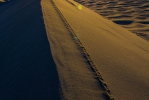 Sand Dunes and Salt Flats / Deserts, Salt Flats and any other dry, non-rocky place. / by Dani Eide