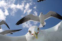 Gull Photography