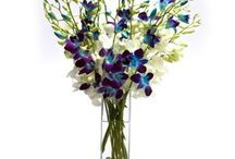 Send Flowers Online / Here you can find the best collection of all kind of flowers and arrangements.