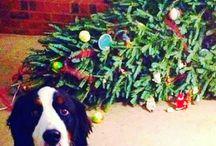 Karácsony állatkák