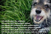 Sprüche mit Hund