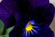 Λουλουλουδια
