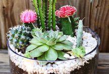 Flores, plantras, horta