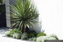 Contemporary Costal Garden Planting