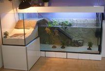 красноухая черепаха, аквариум ...