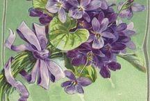 Flacăra Violet