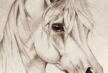 Paard tekeningen