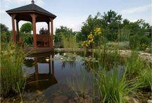 Rybníky, jazerá a jazierka