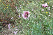 Flora en el entorno / Flora en el alrededor del Hotel Posada la PLaza