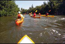 Kayak Tours Naples Florida / Kayak Tours with Naples Kayak Company
