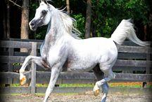 Stallions / by Jennifer Ramsey