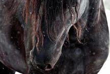 For the Love of Horses  / strength and freedom