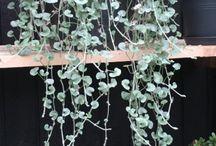 Overvintring planter