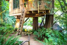 treehouses / treehouses