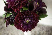 Wedding Flowers / by Alexie Gillespie