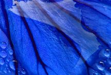 BriLLiaNt BLUe hUeS / by Angie Barnett