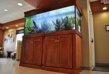Aquariums by Aquatica / A gallery of aquariums that we have either built and/or set up for customers