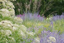 Planting Combinations - Inspiration