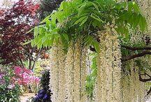 beautiful garden & plants