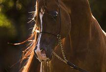 cavalos// acessorios