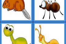 hmyz, vodné ž.