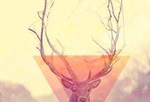 Deer Desing