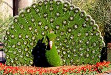 topiaria