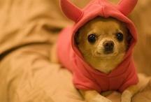 Chihuahuas Rule! / by Rebecca Sein