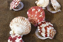 coisas de mar